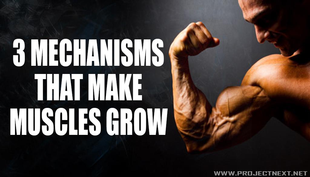 3 Mechanisms That Make Muscles Grow