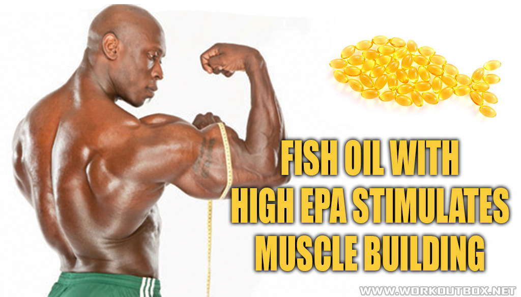Fish Oil with high EPA stimulates Muscle Building