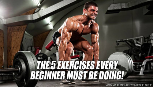 The 5 Exercises Every Beginner Must Be Doing!