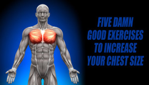 Five Damn Good Exercises to Increase Your Chest Size