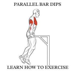 Parallel Bar Dips! Learn How To Exercise