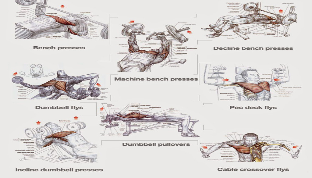 Chest Workouts To Gain Muscle Fast Project Next
