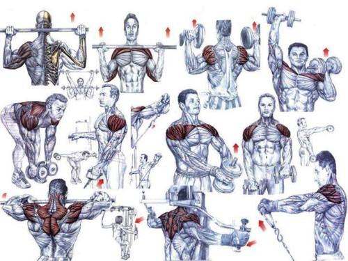 Shoulder Exercises For Beginning Bodybuilders