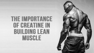 The Importance Of Creatine In Building Lean Muscle