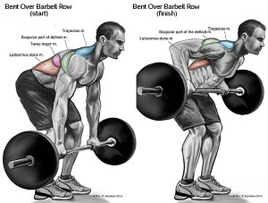 The Top Exercises For The back muscles