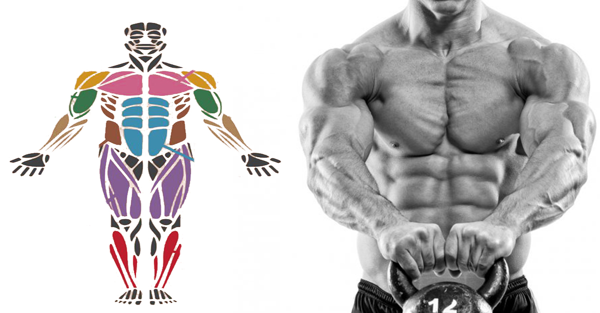 5 TIPS FOR BUILDING MUSCLE BACKED BY SCIENCE