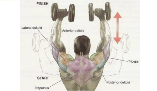Broad Shoulders – How To Get Them