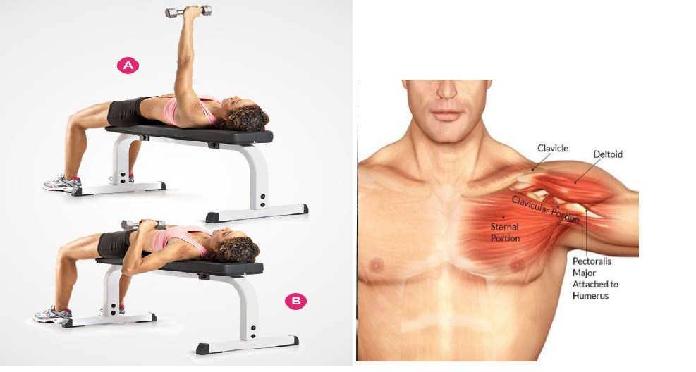 Have You Tried One of The Best Chest Building Exercises ?