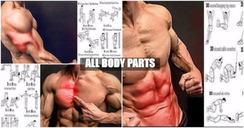 Gym Workouts – All Body Parts