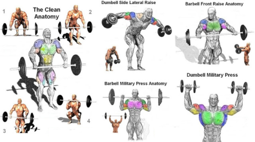 Muscle Day : Basic Shoulder Workouts For A Beginner