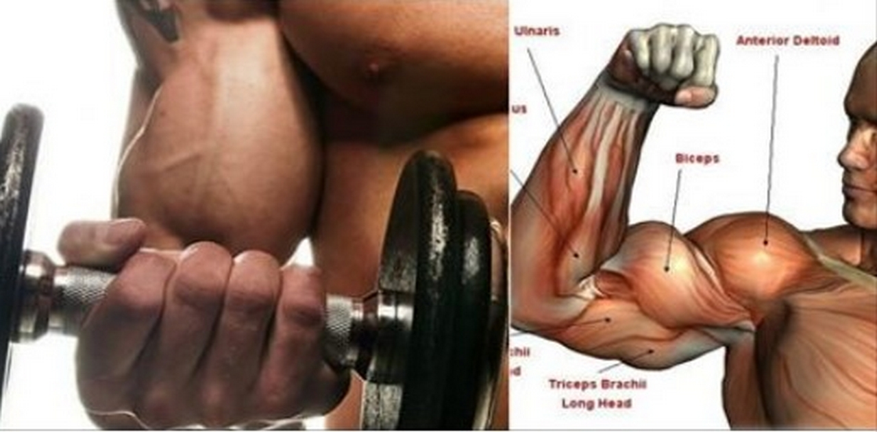 3 Reasons Why Your Biceps Won't Grow !