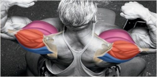 Double Phase Shoulder Width And Growth Workout Plan