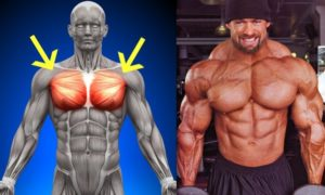 Tips To Build a Massive Chest : Five Must-Do Chest Exercises