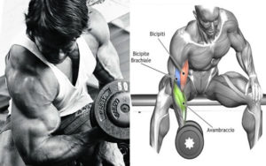 Murder Your Biceps With These 4 Brutal Exercises