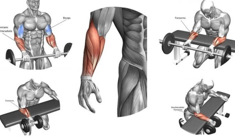 The Best Exercises For Massive Forearm
