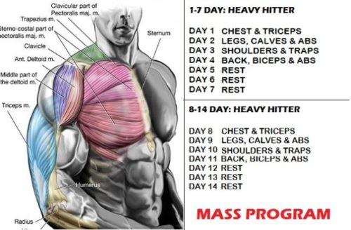 Muscle Mass And Strength Increase- 10 Simple Tips For Great Results