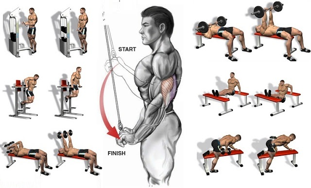 Building Massive Triceps – A Call to Arms