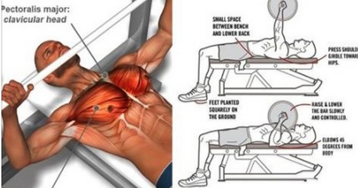 6 Tips To Improve Your Bench Press Instantly