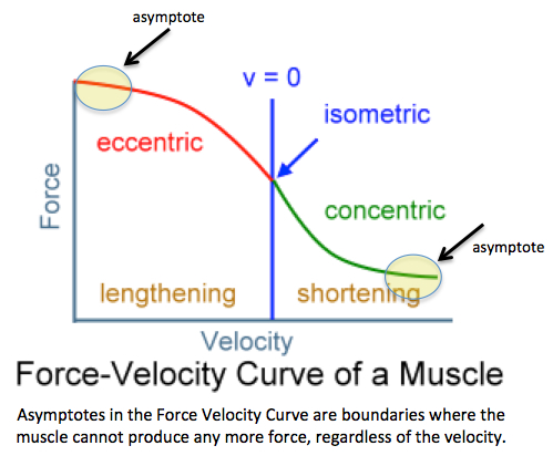 force velocity relationship concentric eccentric and isometric exercises