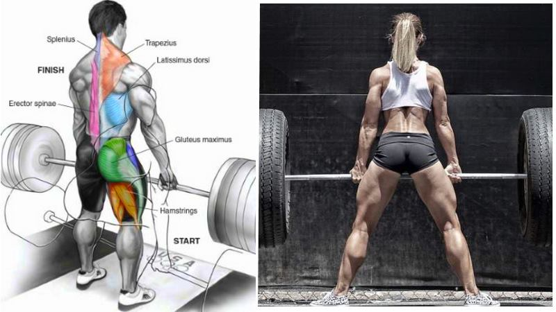 The Top 12 Reasons Why the Deadlift Is One of the Best Exercises Ever