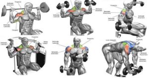 The Complete Guide To Delts Training – Exercises Sets & Reps