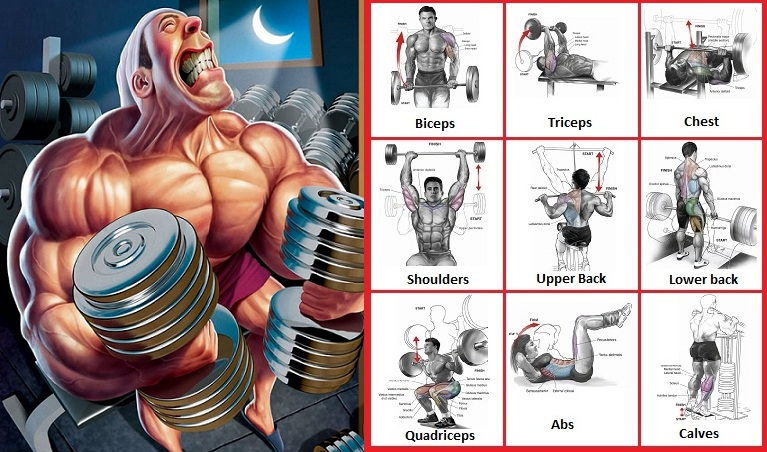 How to Lift Weights to Build Muscle – How Bodybuilders Do It