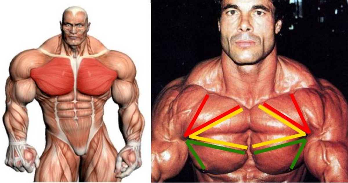 Most Effective Chest Exercises (According To Science)