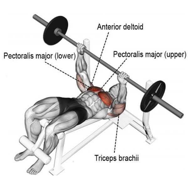 Most Effective Chest Exercises (According To Science ...  Most Effective ...