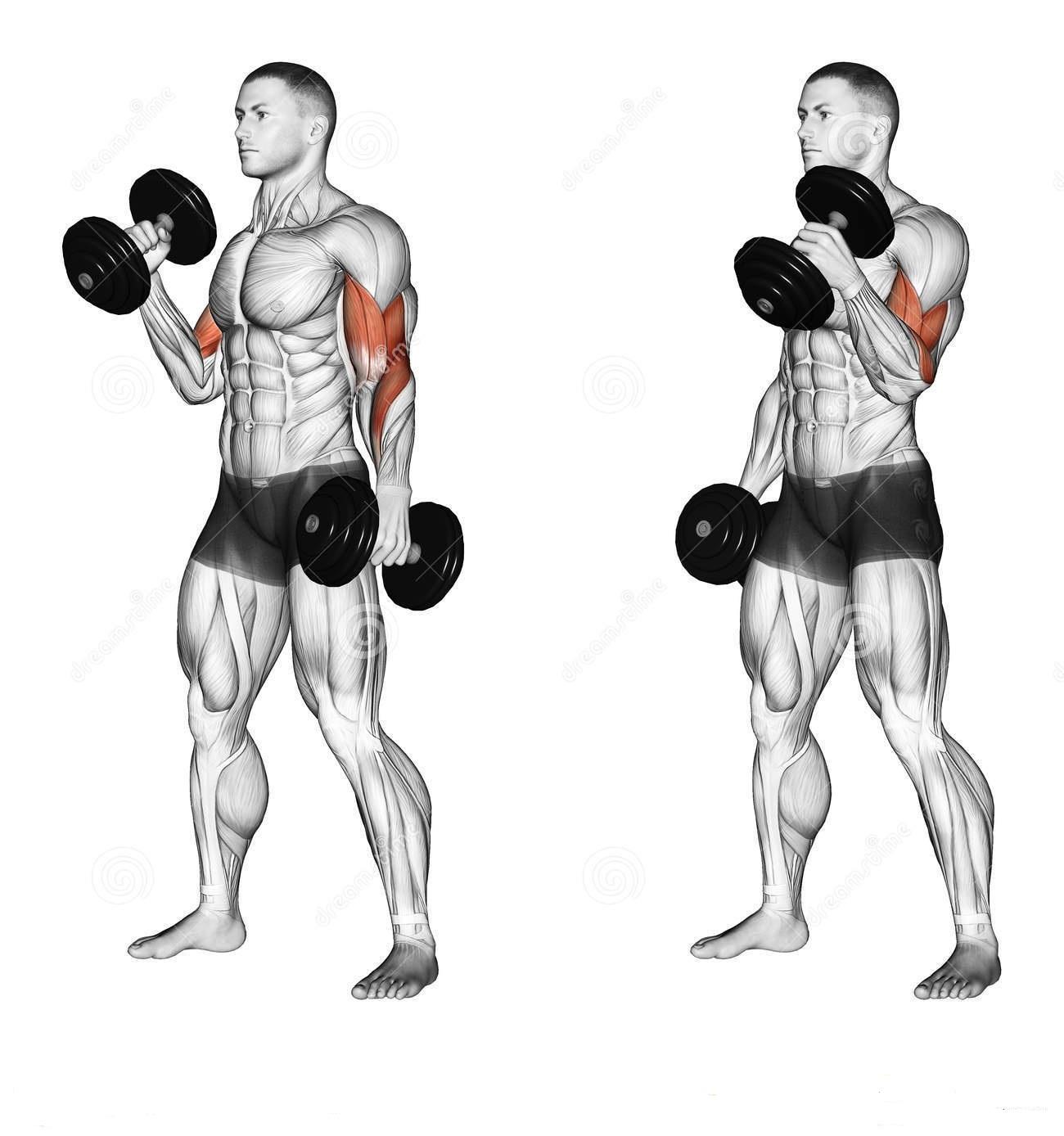 PROJECT NEXT - Fitness & Bodybuilding Freak